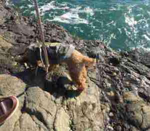 江ノ島の海で遊ぶ犬