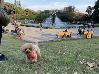 世田谷公園の噴水広場