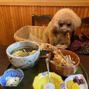巣鴨で蕎麦を愛犬と一緒に