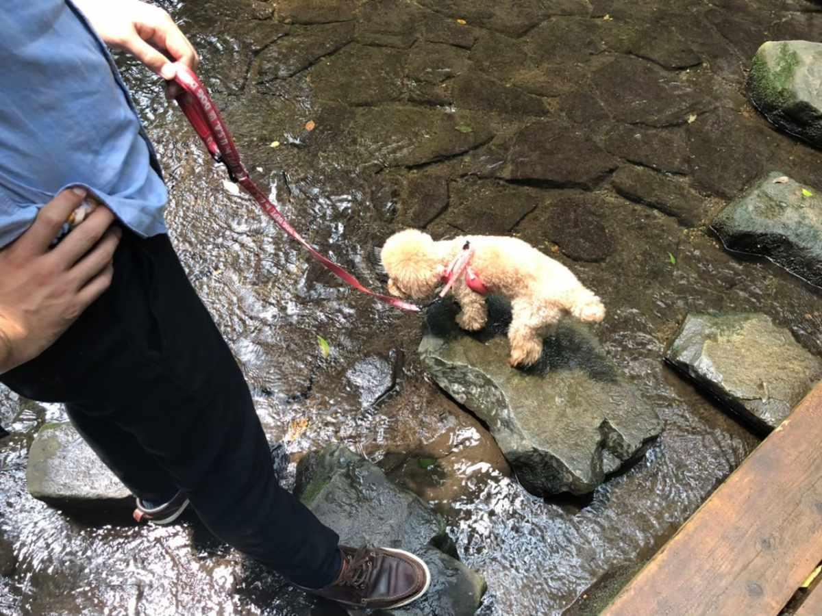 等々力渓谷公園でワンちゃん水遊び