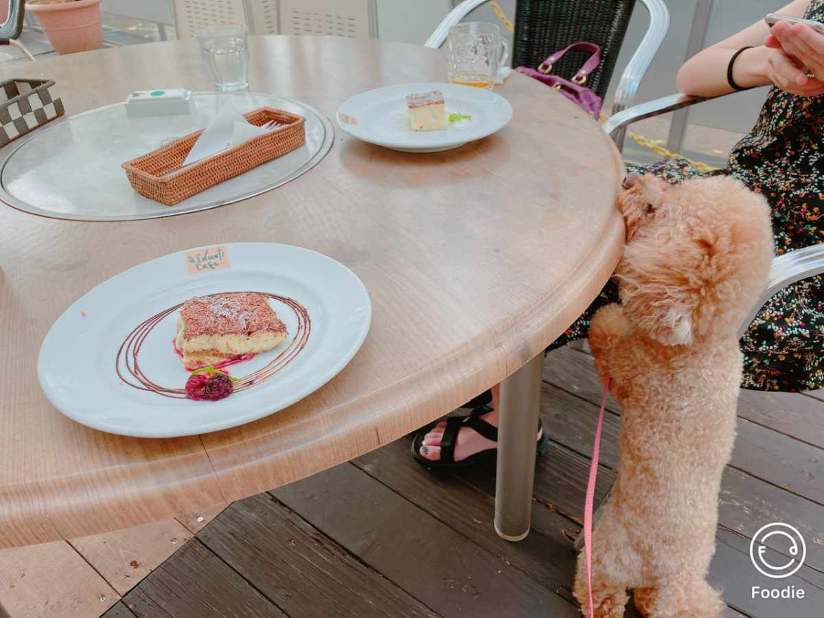 イルキャンティー(初台店)に愛犬と
