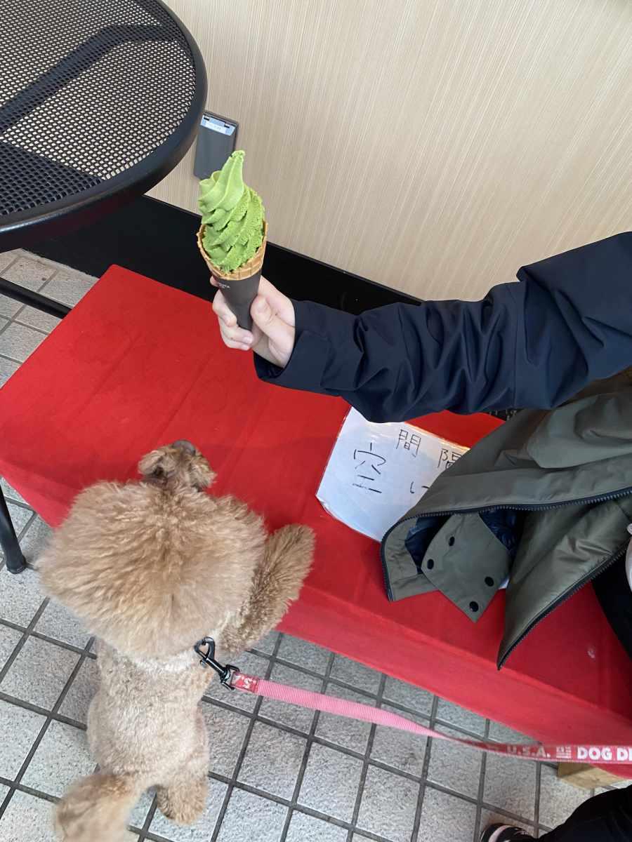 小金井公園 そば茶屋 さくら 抹茶ソフトクリーム