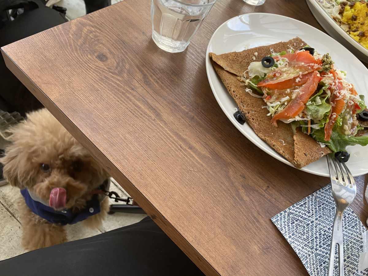 カフェ・ドゥ・リエーヴル うさぎ館のガレットと犬