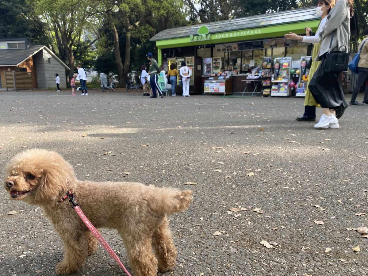 代々木公園 原宿駅方面入り口のすぐの売店