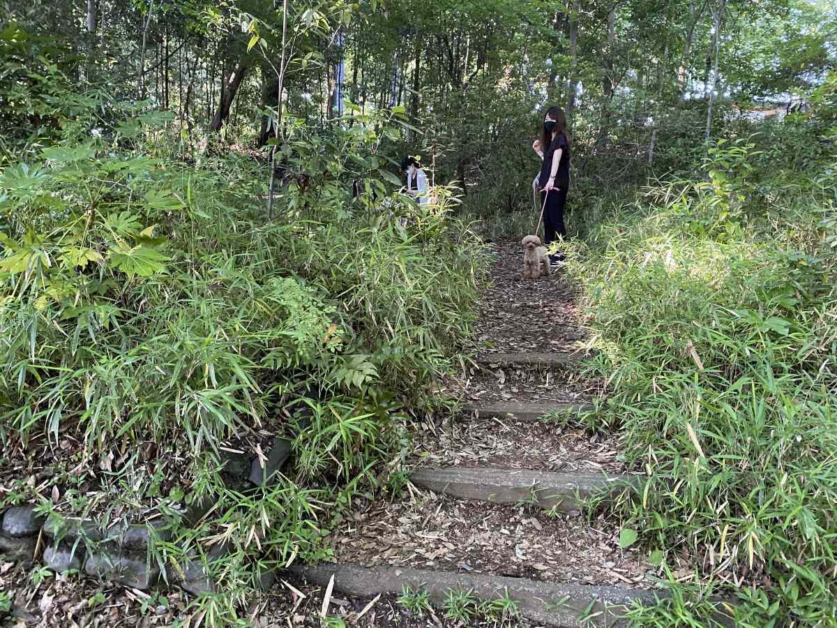 石神井公園の高台に愛犬と
