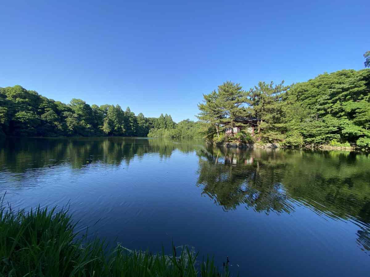 石神井公園の湖(三宝寺池、石神井池)