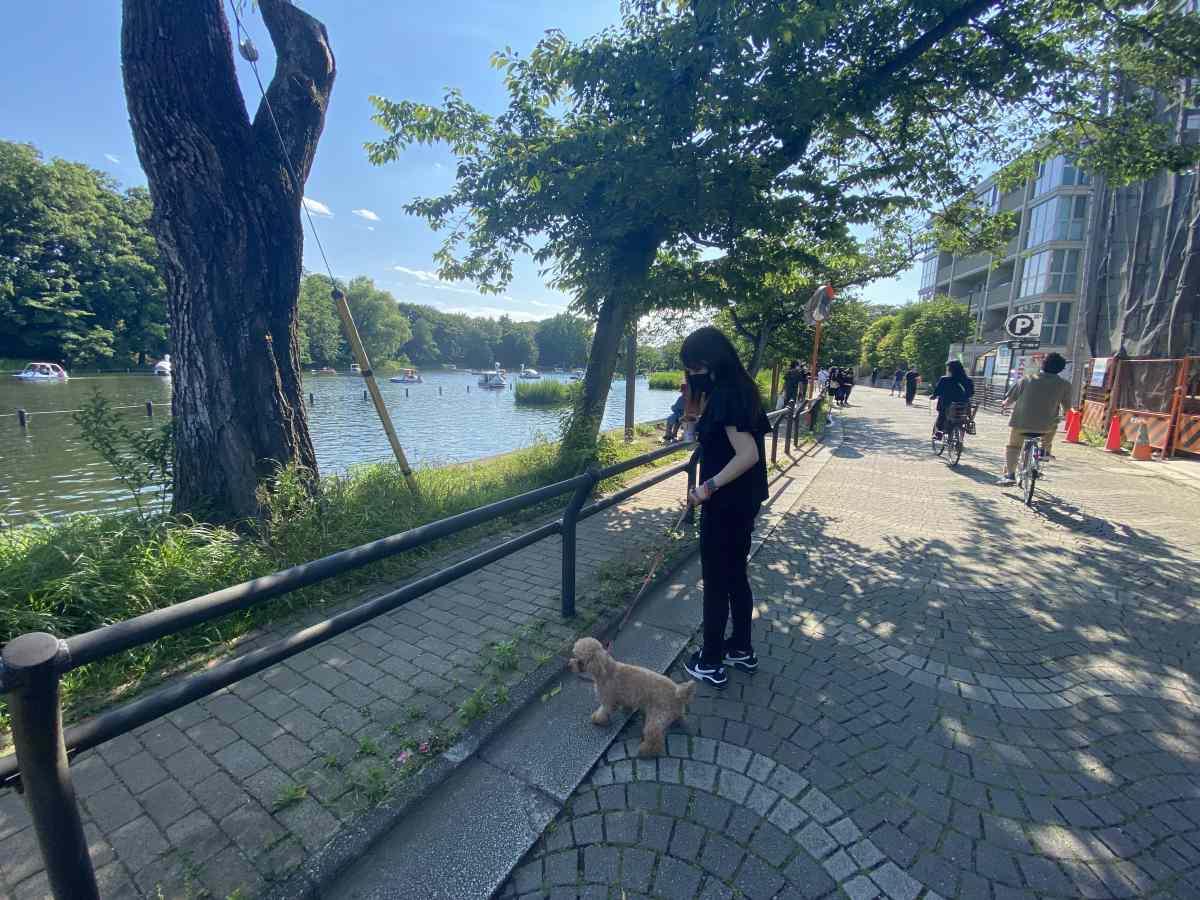石神井公園、遊歩道を愛犬と高級住宅が並ぶ歩きやすい道