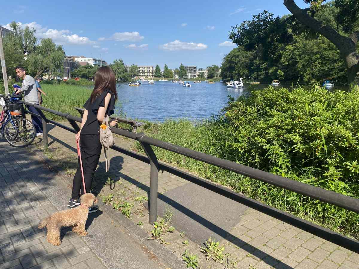 石神井公園の湖を愛犬と