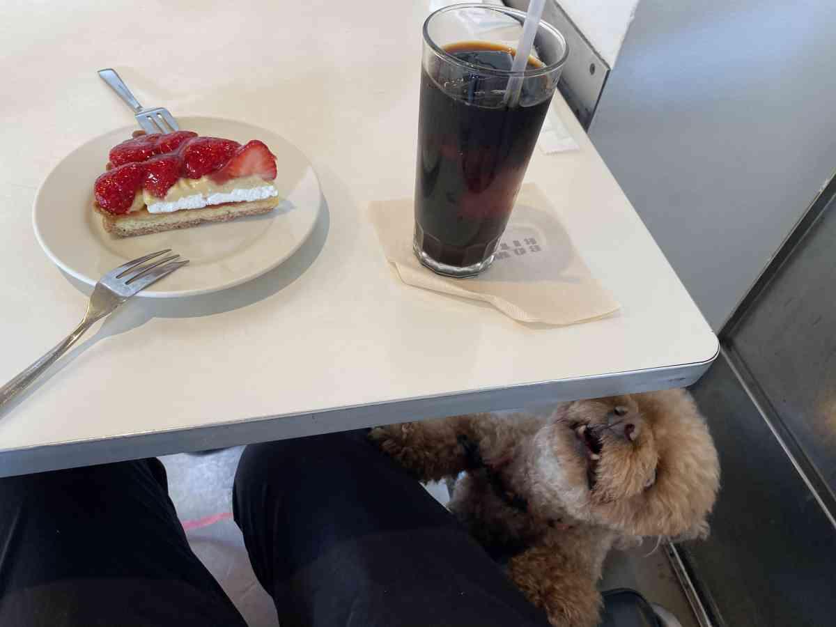 バワリーキッチンの苺のタルトと犬