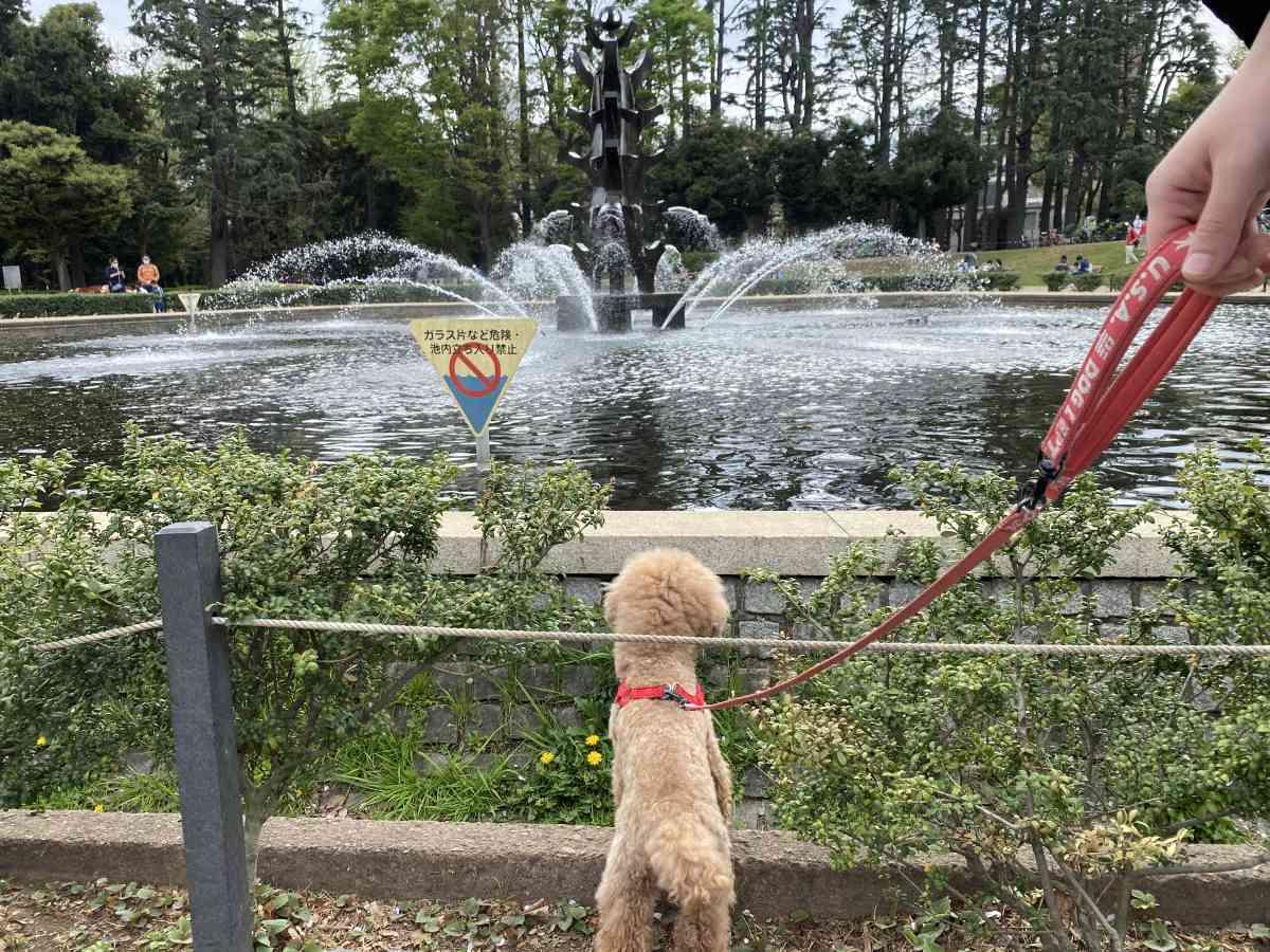 世田谷公園の噴水と犬