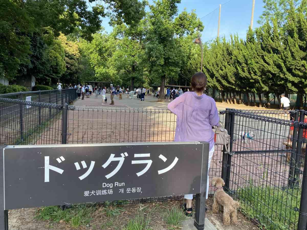 駒沢公園のドッグラン