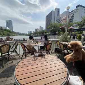 神楽坂・飯田橋のカナルカフェのテラス席からの景観