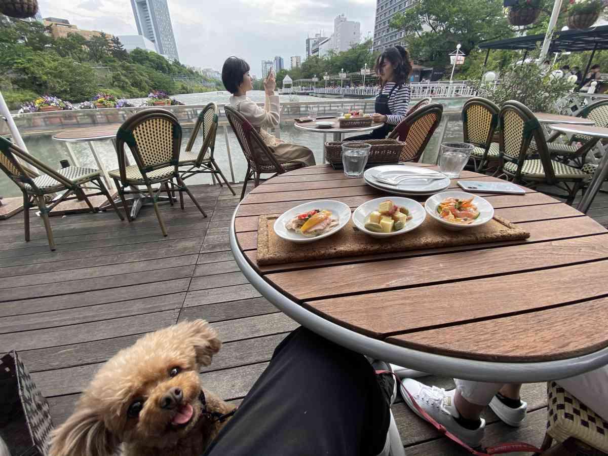 神楽坂・飯田橋のカナルカフェのテラス席と犬