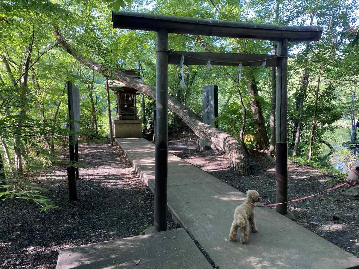 石神井公園の小さな鳥居