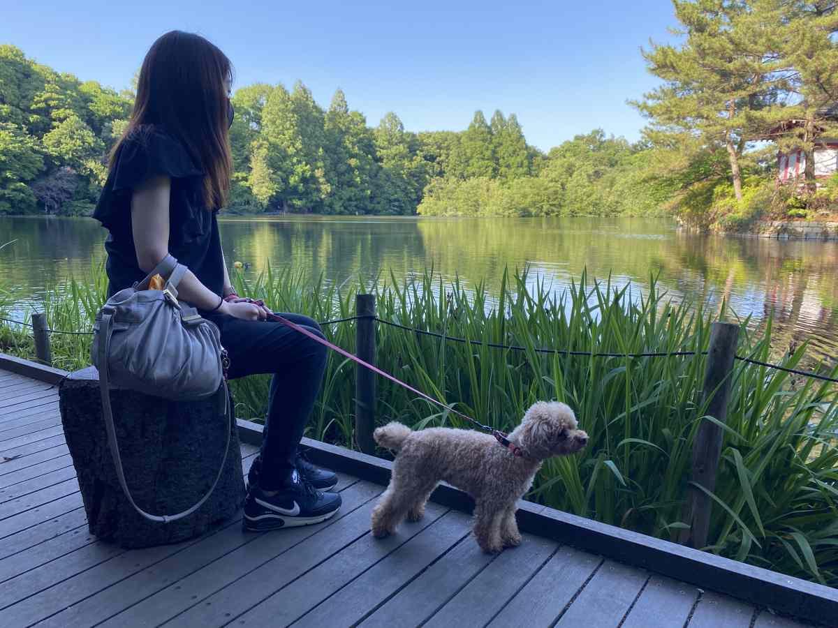 石神井公園の絶景ポイントを愛犬と
