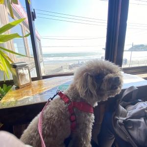由比ヶ浜のシードレスバーのオーシャンビューの席と犬