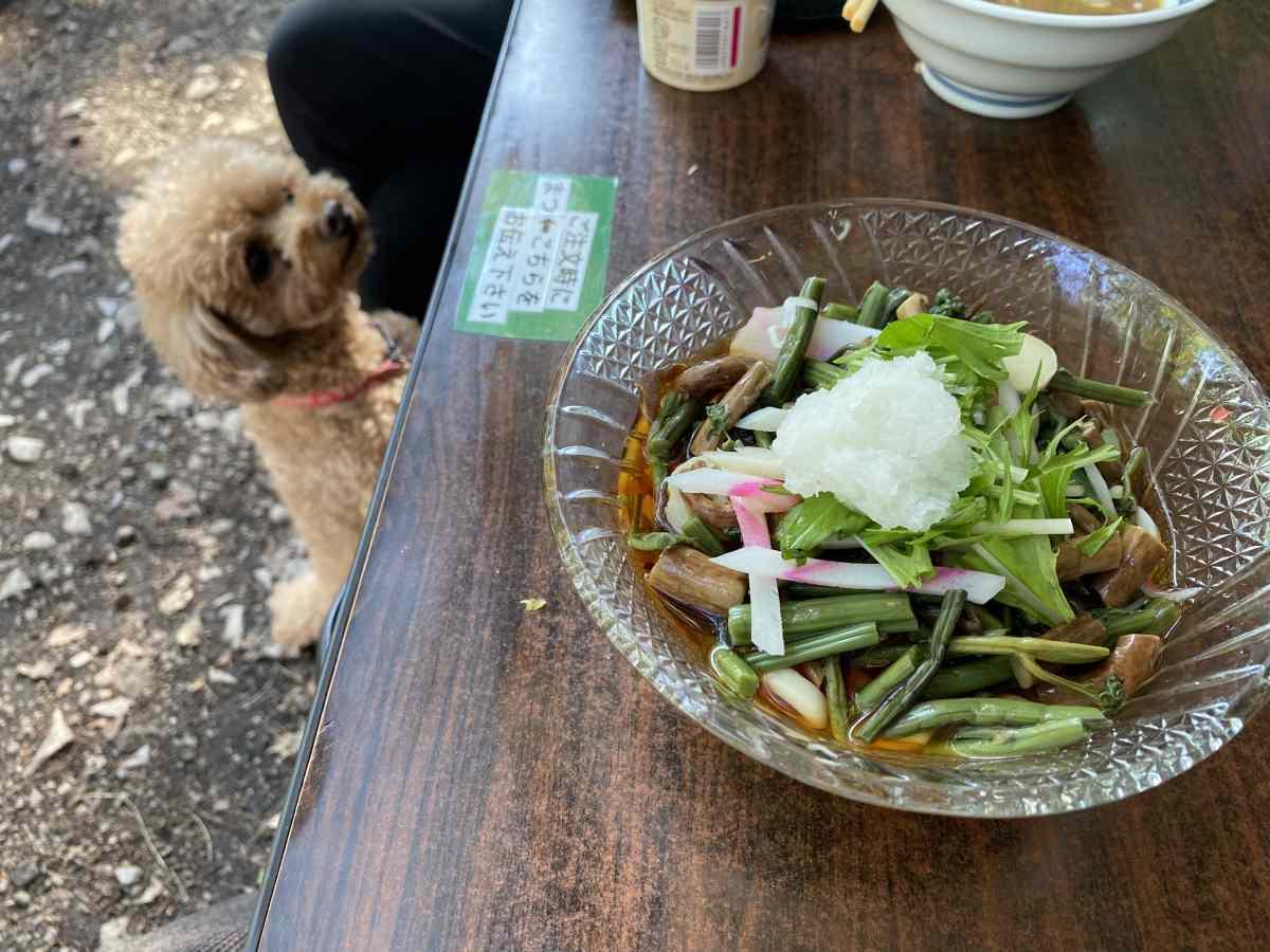 石神井公園の豊島屋の「山菜そば」と愛犬