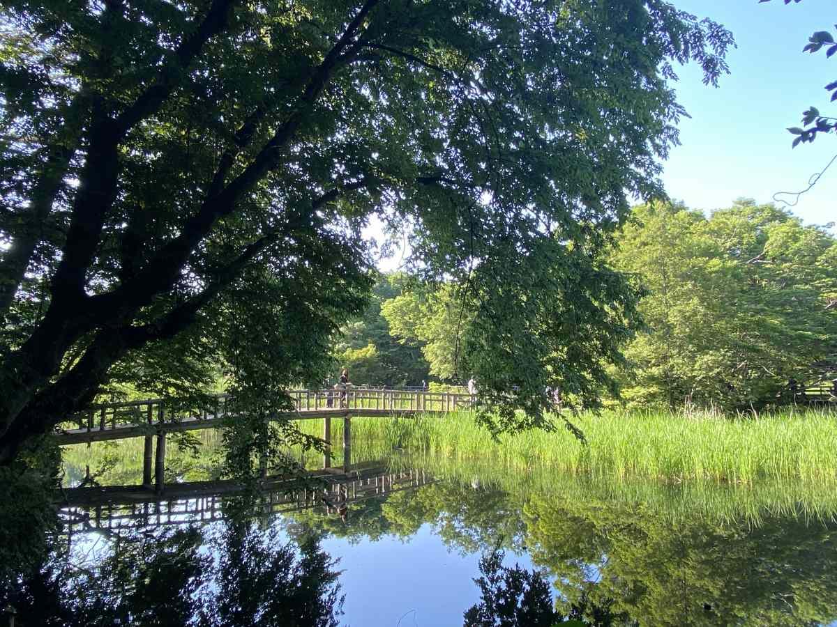 石神井公園の池に掛かる橋