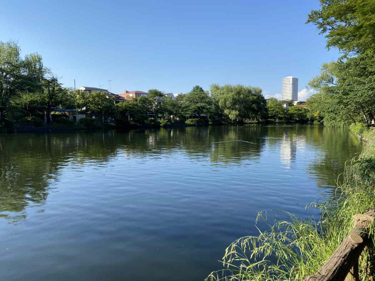 石神井公園、湖越し駅方面を望む