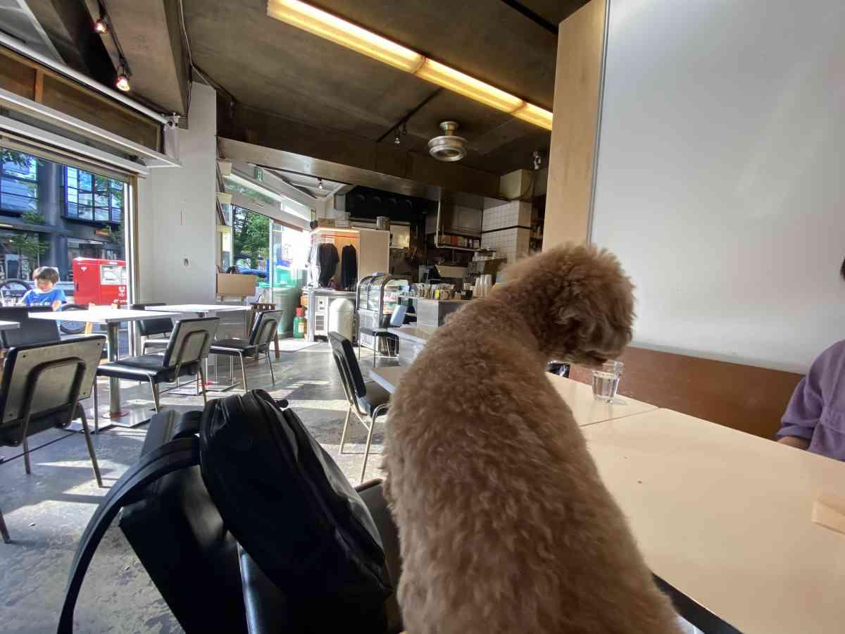 バワリーキッチン、店内で愛犬と