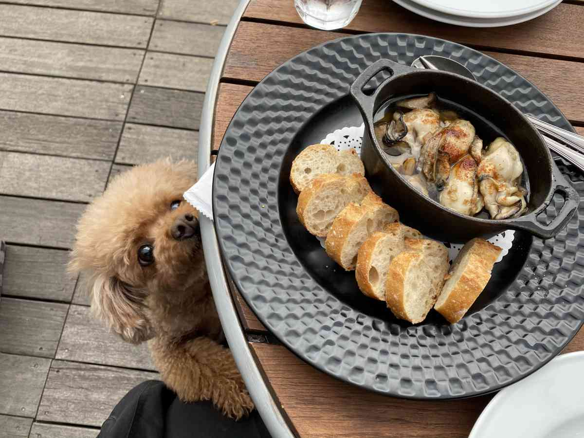 神楽坂・飯田橋のカナルカフェの牡蠣のアヒージョと犬