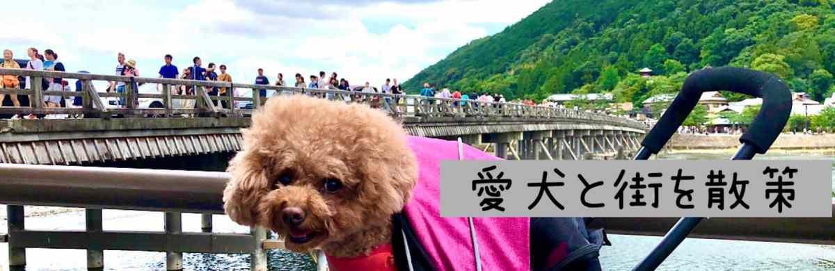 愛犬と街を散策できるとこを探す