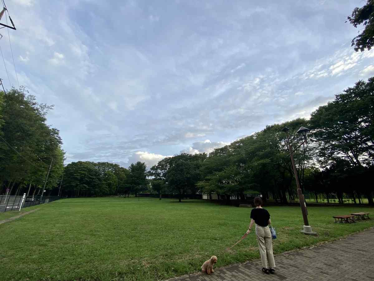 城北中央公園の原っぱ