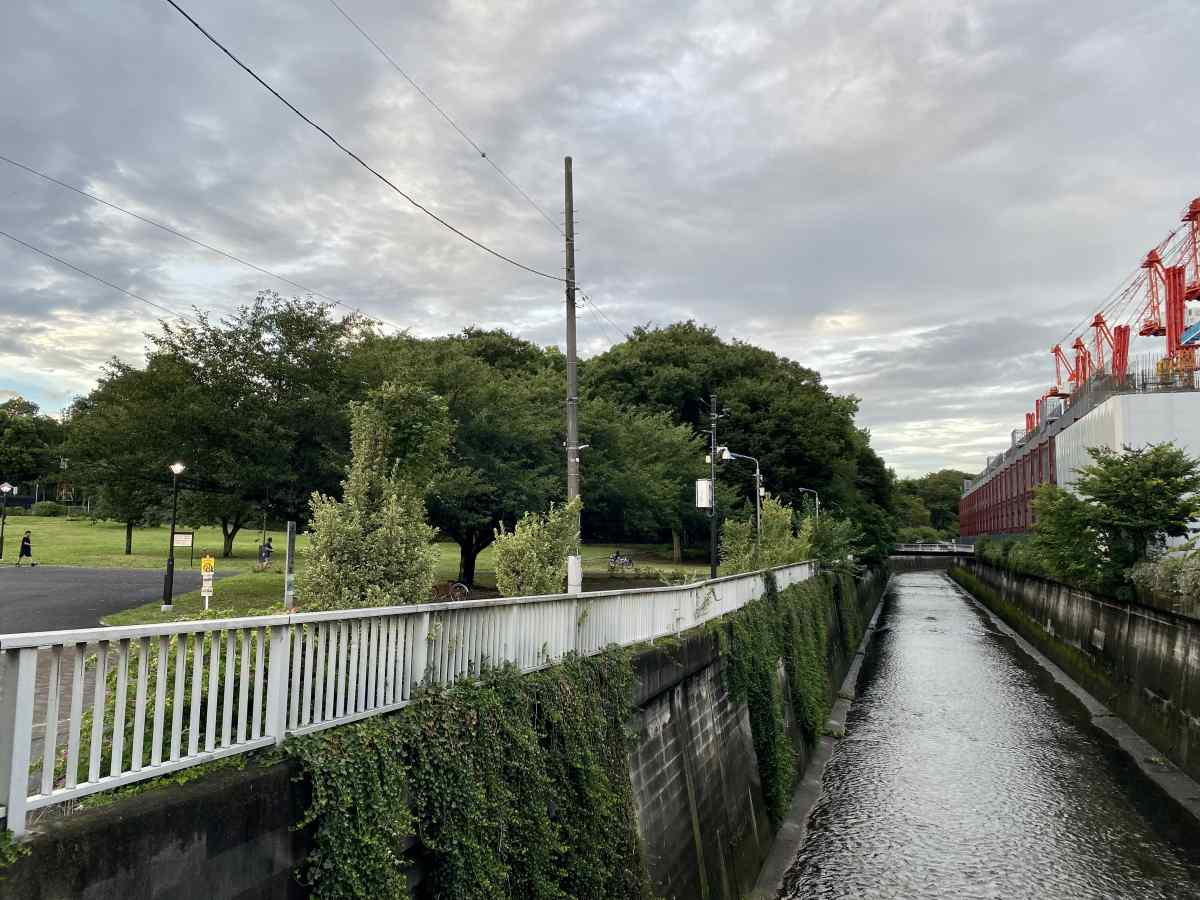 城北中央公園の石神井川
