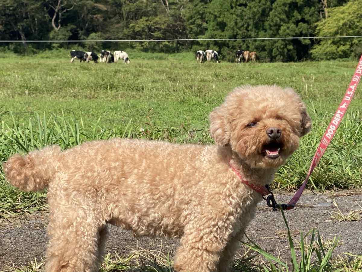 ハートランド朝霞、犬と牛