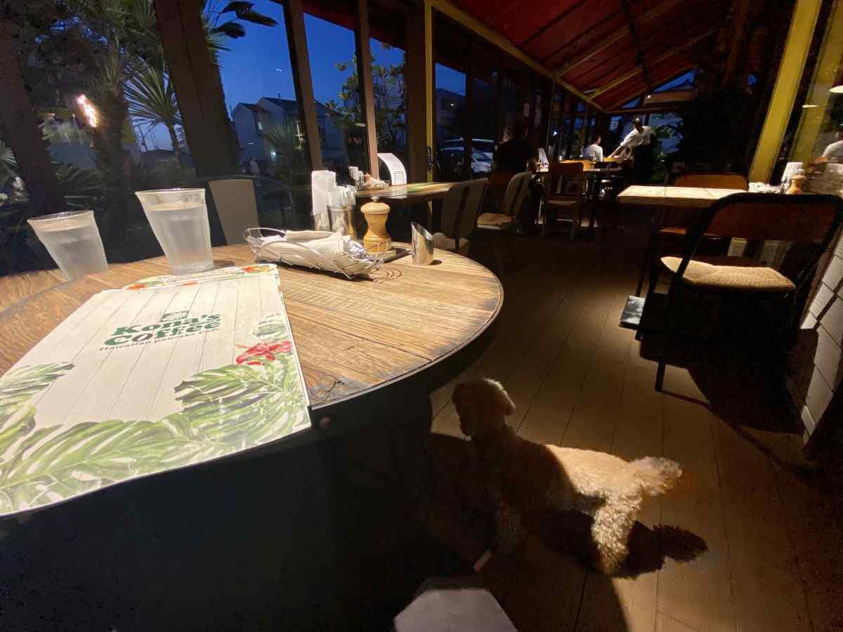 コナズ珈琲の犬連れ可能エリア