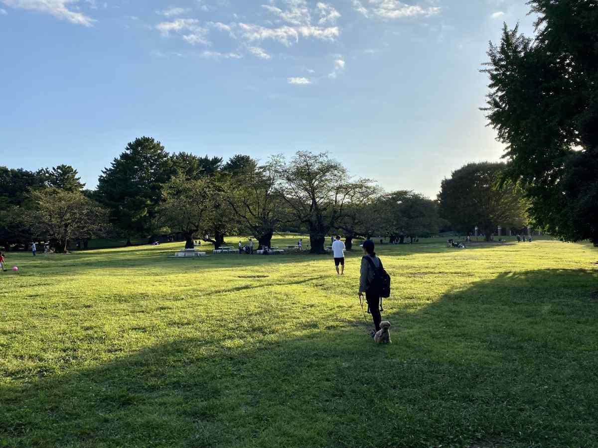 光が丘公園、西側の芝生