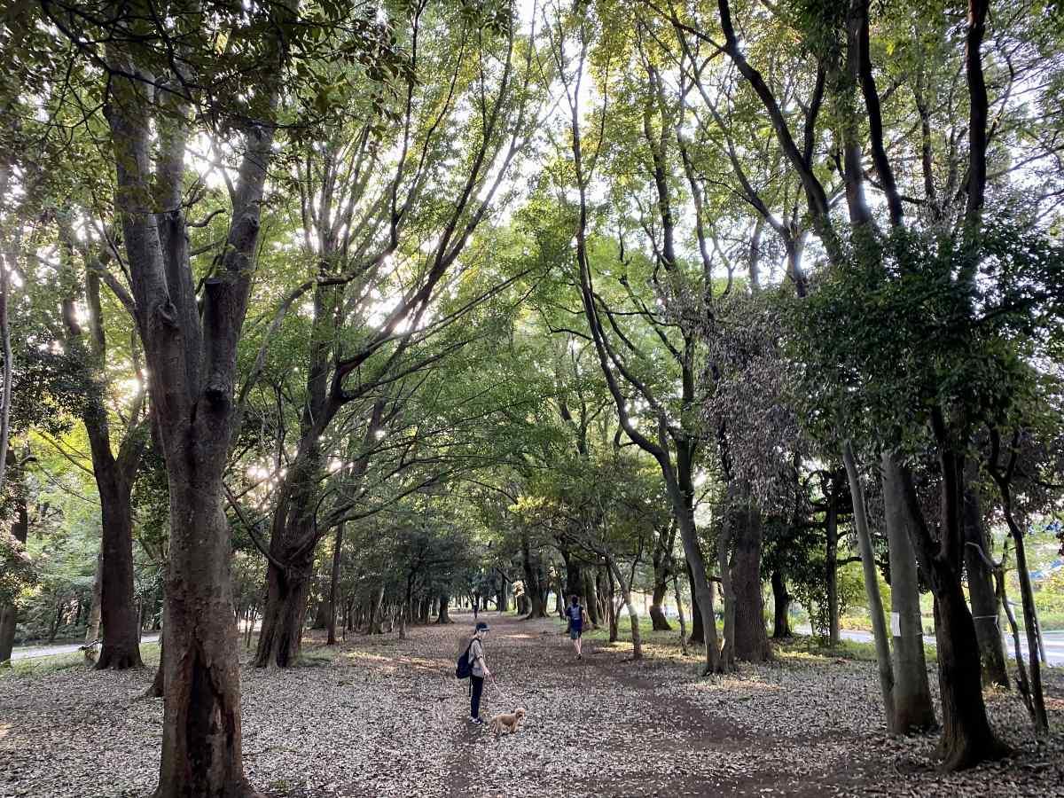 光が丘公園、北側の森道