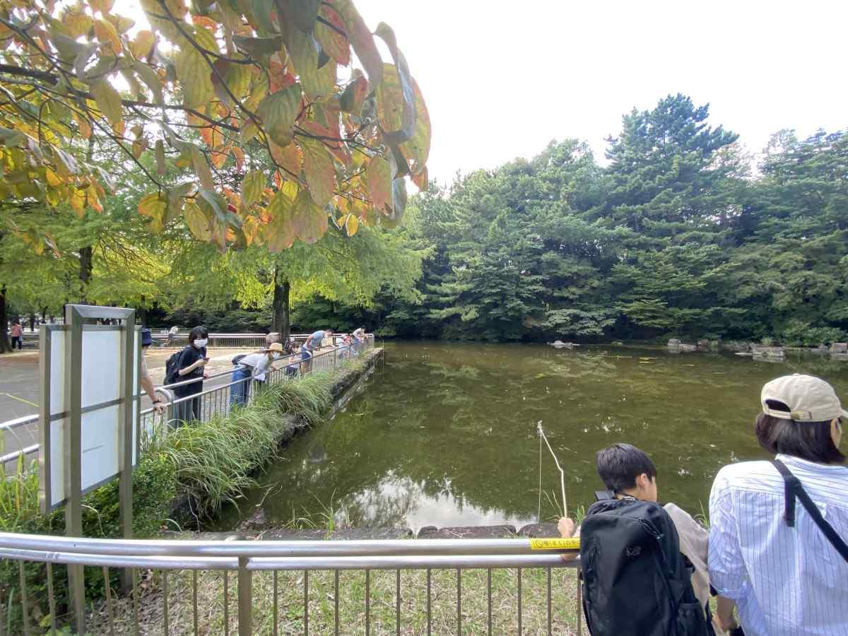 光が丘公園の池