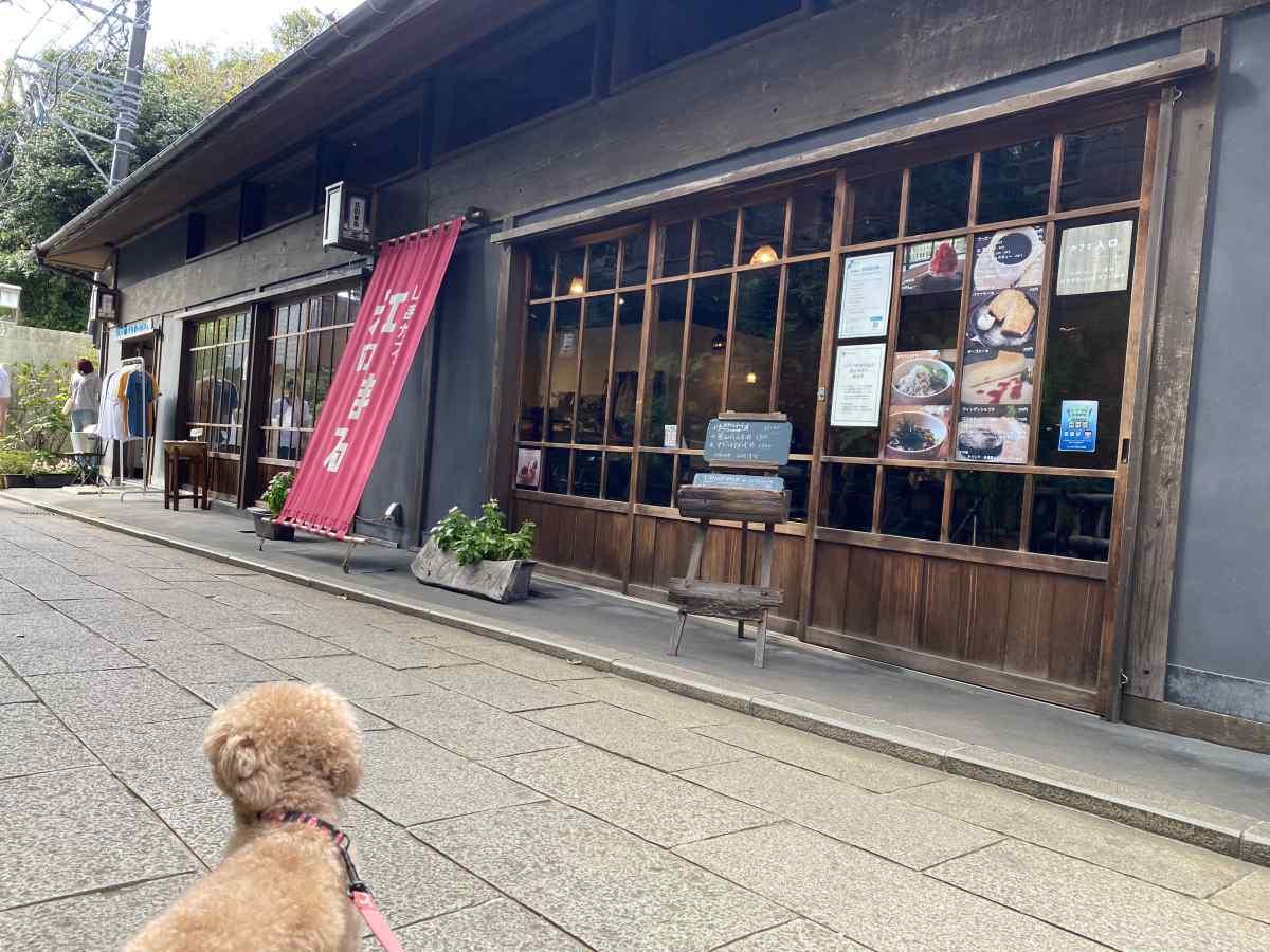 江の島のおしゃれなお店