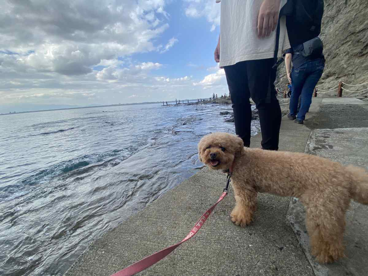 江の島の「稚児ヶ淵」の岩場で愛犬と